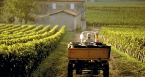francuski-vinograd-0601